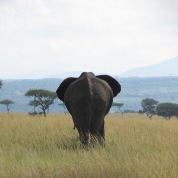 Kenya_Safari_Masa