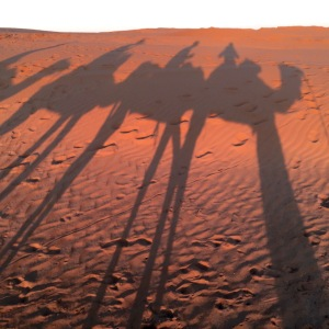 Sahara_camels_shadow