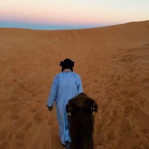 Sahara_guide_camel