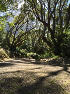 BotanicalGardens-tree