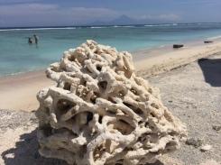 gili-coral