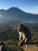 gunung-monkey