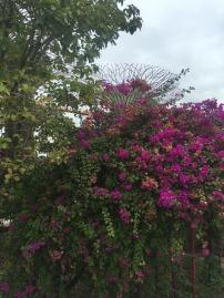 gardensbythebay-flowers
